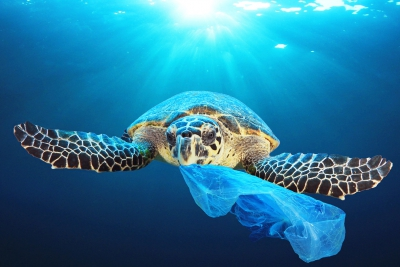 Due to its slow rate of decomposition, plastic accumulates in seas, oceans and on beaches© AP Images/European Union-EP